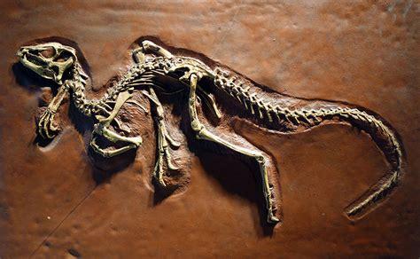 fileheterodontosaurus tucki cast university