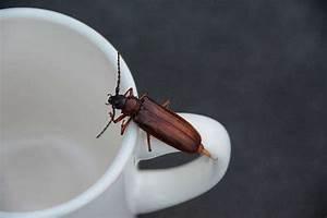 Piege A Cafard : 18 utilisations surprenantes du marc de caf dont vous n ~ Melissatoandfro.com Idées de Décoration