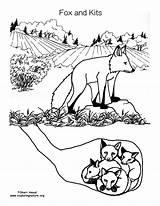 Fox Coloring Den Kits Animal Drawing Animals Baby Background Pdf Mural Exploringnature sketch template