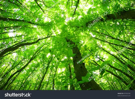 Green Forest Backgrounds by Green Forest Background In A Day Stock Photo