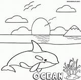 Ocean Coloring Pages Orca Colorings sketch template
