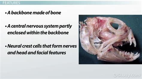 Vertebrates: Definition Features & Classification Video