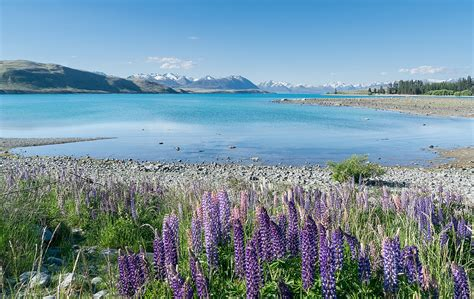 Lake Tekapo - Wikipedia