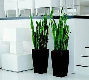 Plante De Salon : cherche grande plante deco pour mon salon ~ Teatrodelosmanantiales.com Idées de Décoration