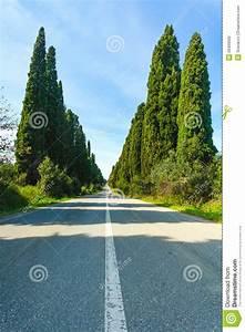 Bolgheri Famous Cypresses Tree Boulevard Landscape ...
