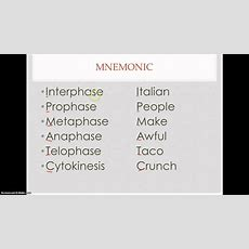 Memorize The Cell Cycle Youtube