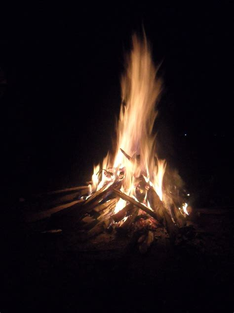 what of wood to burn in fireplace wood fuel
