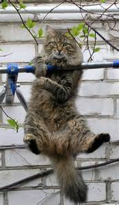 hang in there cat hanging in there cat