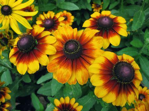 types  flowers  plant  summer summer flowers