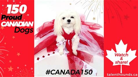 150 Proud Canadian Dogs For Canada Day Youtube