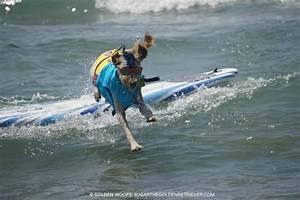 11 things youll learn surfdog surfdogunleashed
