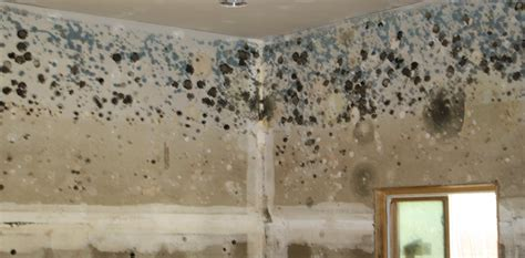house  mold important symptoms