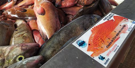 sustainable grouper cepf