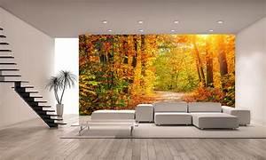 Autumn Forest Wall Mural Photo Wallpaper GIANT WALL DECOR ...