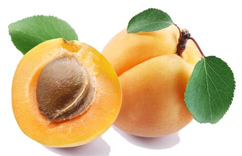 Images Transparent Background by Top 18 Apricot Png Transparent Images Free Transparent