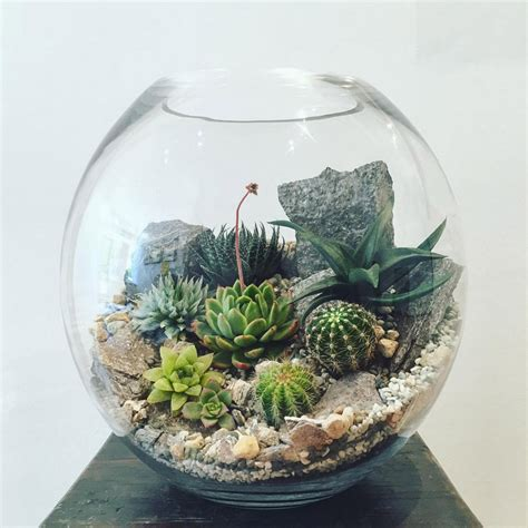 terrarium plants desert world terrarium extra large bioattic specialty plants