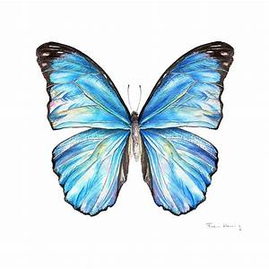 Blue Morpho Butterfly Painting by Fran Henig