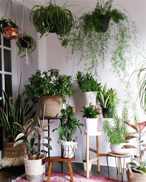 Hängende Pflanzen Wohnung by Plantgang Gr 252 Npflanzen Green Plants Zimmerpflanzen