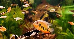 Aquarium Einrichten Anfänger : das erste aquarium f r anf nger guide zum einrichten und ~ Lizthompson.info Haus und Dekorationen