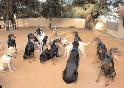 Canine soldiers : NATION - India Today 4022008