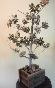 when money grows on trees table for fifty With tree as wedding gift