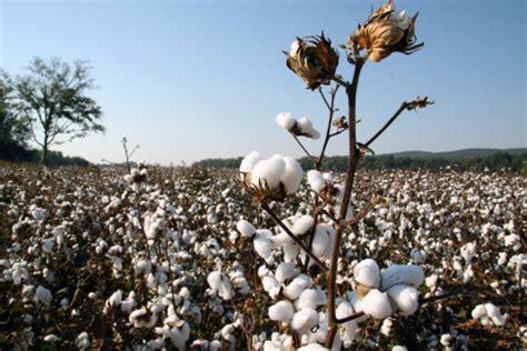 cotton planters cotton kidcyber