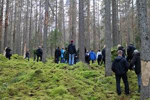 Focali brief: What is the preference of Swedish forestry ...