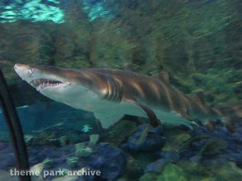 Theme Park Archive Shark Encounter Sea World San Diego