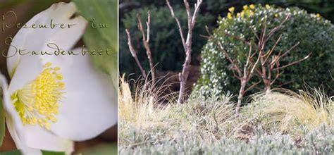 Immergrüne Gräser by Gartenblog Geniesser Garten Staudenbeet Im Winter