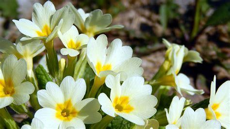 tipi di fiori elenco tipi di fiori elenco tipi di fiori elenco fiori eduli l