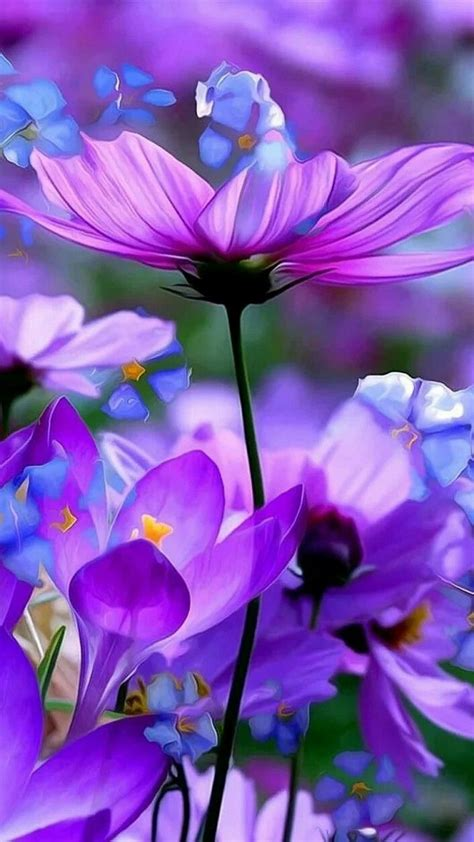 Soft And Beautiful Picture Of Purple And Blue Flowers