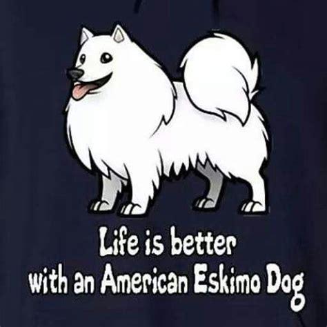american eskimo shedding problem m 225 s de 1000 ideas sobre perro esquimal americano en