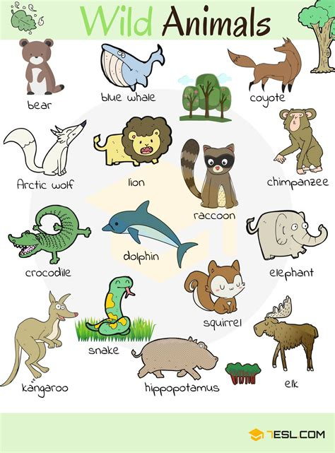 Animals Vocabulary, Names, List, Pictures  English Vocabulary  English Vocabulary, English