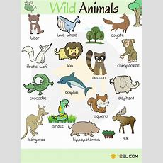 Animals Vocabulary In English  Zoos, Learning And English
