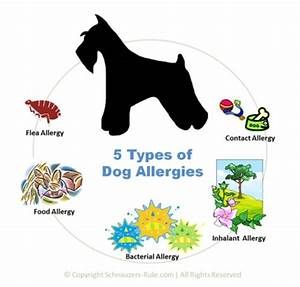 5 dog allergies symptoms and treatment With dog food allergy symptoms