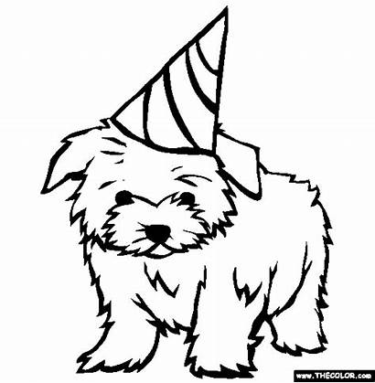 Coloring Pages Maltese Puppy Dogs Dog Printable