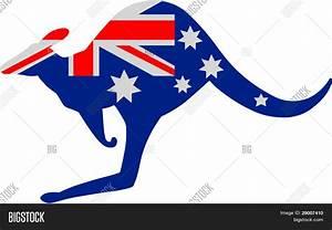 Australian Kangaroo Flag Stock Vector & Stock Photos ...