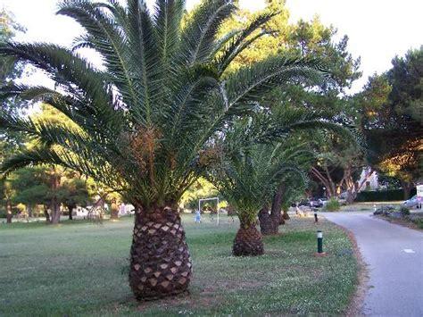 les palmiers du port cogolin photos featured images of cogolin riviera cote d azur tripadvisor