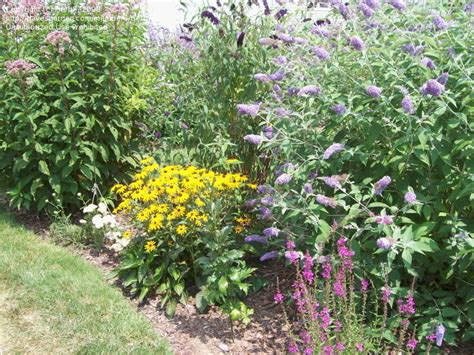 garden article article florida butterfly garden selecting native plants to attract butterflies new york