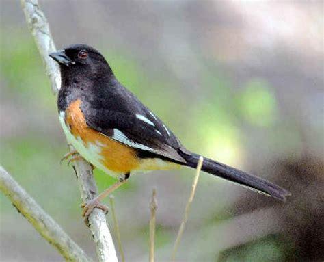 north carolina birds identification quotes