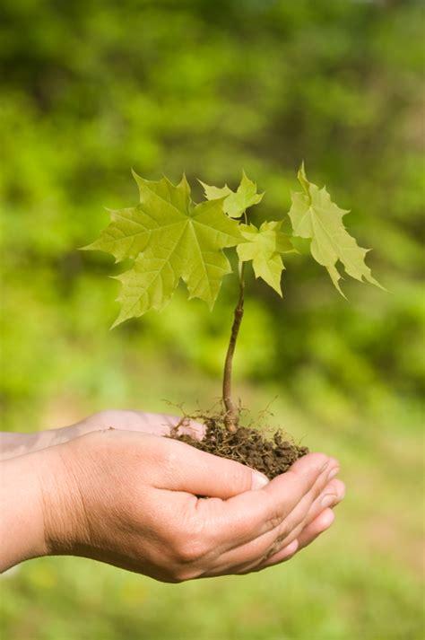 Planting Maple Trees  Blain's Farm & Fleet Blog
