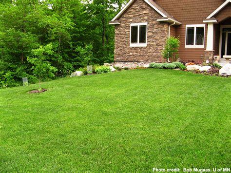 garden grass lawns