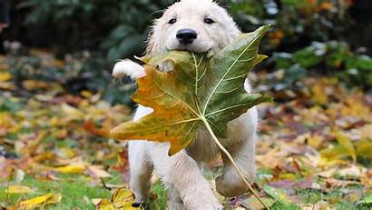 Puppy Desktop Backgrounds Dog Wallpapers Dogs Background