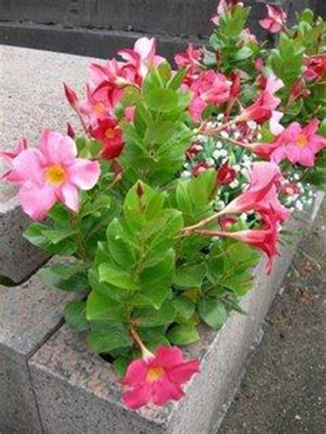 top  des fleurs dete pour cimetieres paperblog