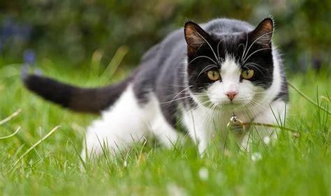 stop cats  pooping   garden top tips