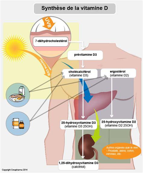 le uv vitamine d vitamine d aliments et vitamine d creapharma