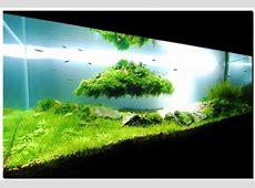 Aquascape Indonesia Material dan Panduan Aquascaping
