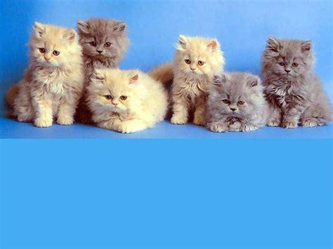 fondo familia de gatos fondos
