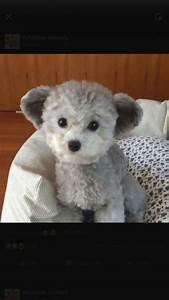Toy Teddy Bear Dogs – Wow Blog