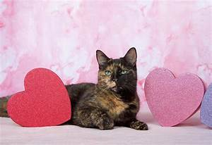 Valentine's Day Cat Photograph by Sheila Fitzgerald